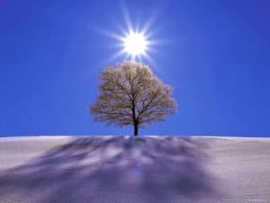 Simple image of the Sun slightly elevated above the winter canopy of lone tree